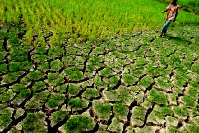 BMKG Sarankan Tunda Garap Sawah Tadah Hujan