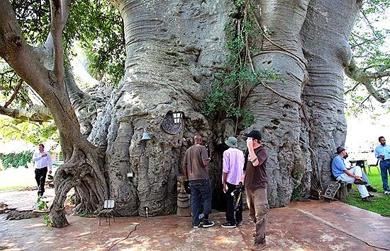 Baobá gigante virou bar - A maior árvore do mundo - Entrada do Bar