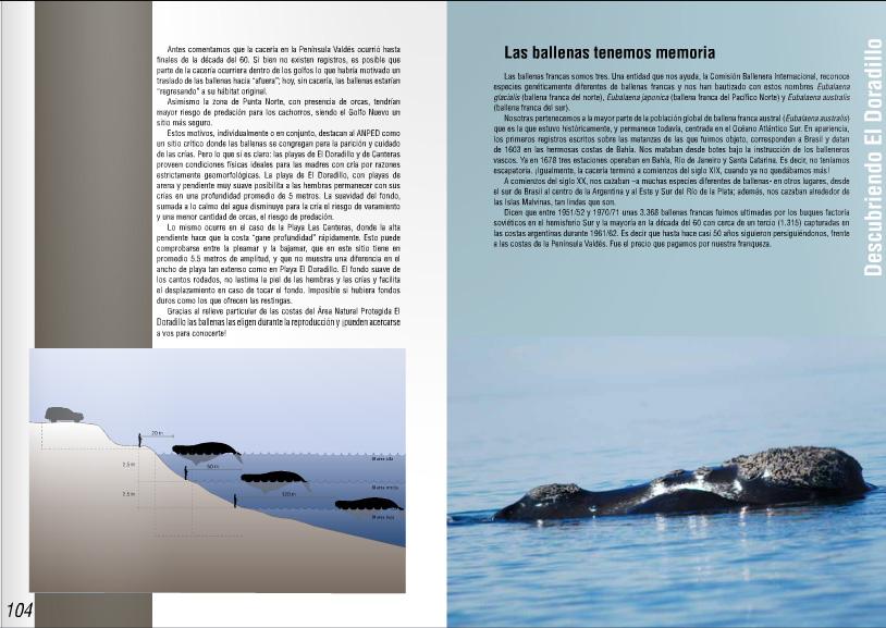 Las ballenas francas en el doradillo