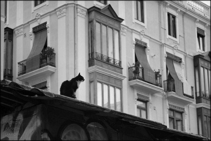 gato,tejado,valencia,fotografia