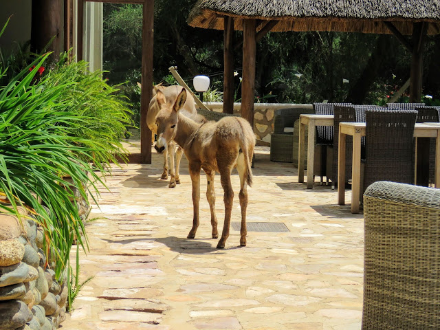 Donkey at Birdnest @ Bunyonyi lodge in Uganda