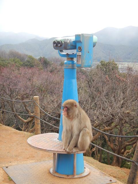 Mono sentado en uno de los prismáticos del parque Iwatayama