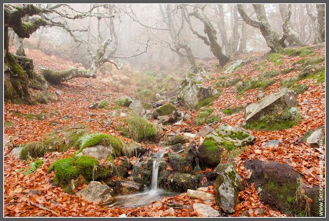 Hayedo de la Pedrosa en Segovia