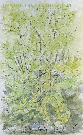 art sketch plein air pen watercolor nature tree