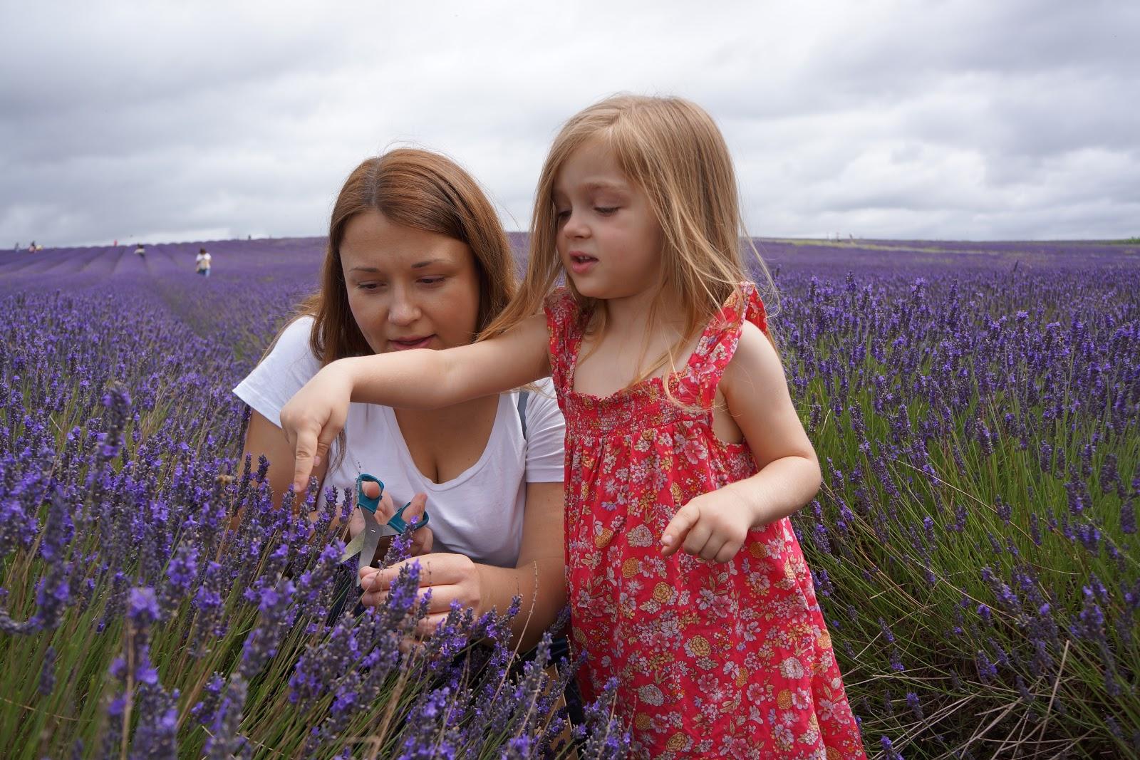 mum and daughter picking lavender