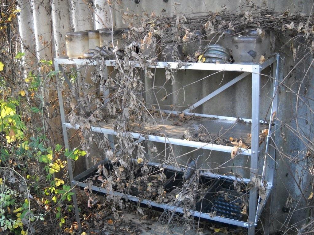 braunelles garten der garten im november the garden in november. Black Bedroom Furniture Sets. Home Design Ideas