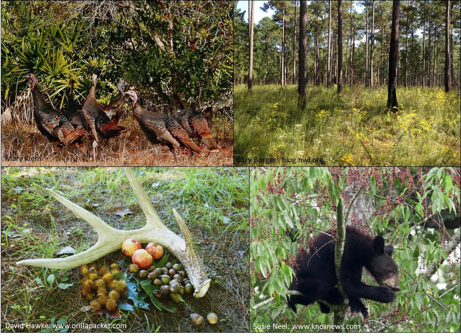 Environmental and Wildlife Management uni subjects