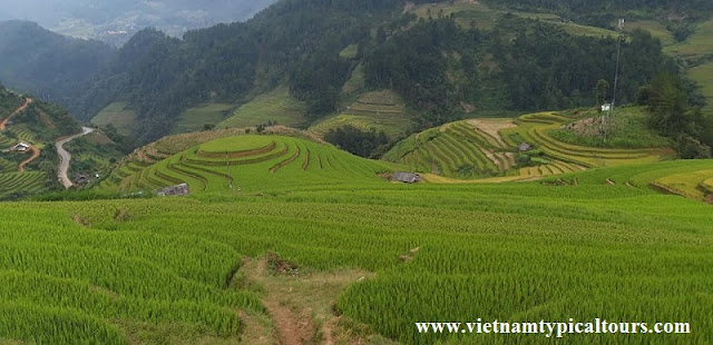 How to choose the Best Trekking Mu Cang Chai tour?