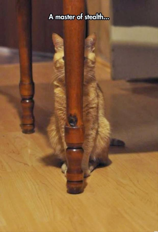 Funny Stealth Master Hiding Cat Joke Picture