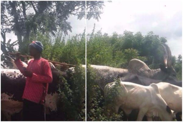 16-people-killed-fresh-herdsmen-farmers-clash-benue-state