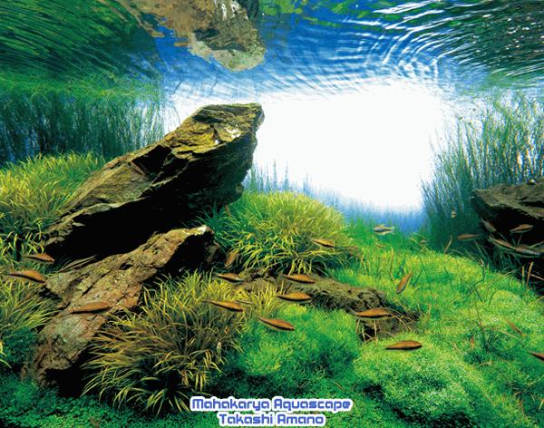 Mahakarya Aquascape Takashi Amano