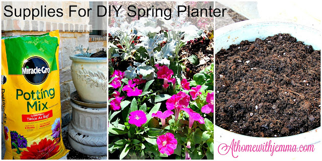 Dusty-Miller-Dianthus-Petunias-potting-mix-container