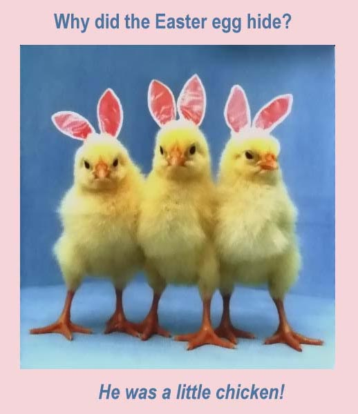 Quotes And Sayings: Happy Easter Funny Quotes,Eggs And Rabbits