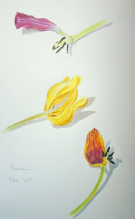 Tulips in watercolour and coloured pencils
