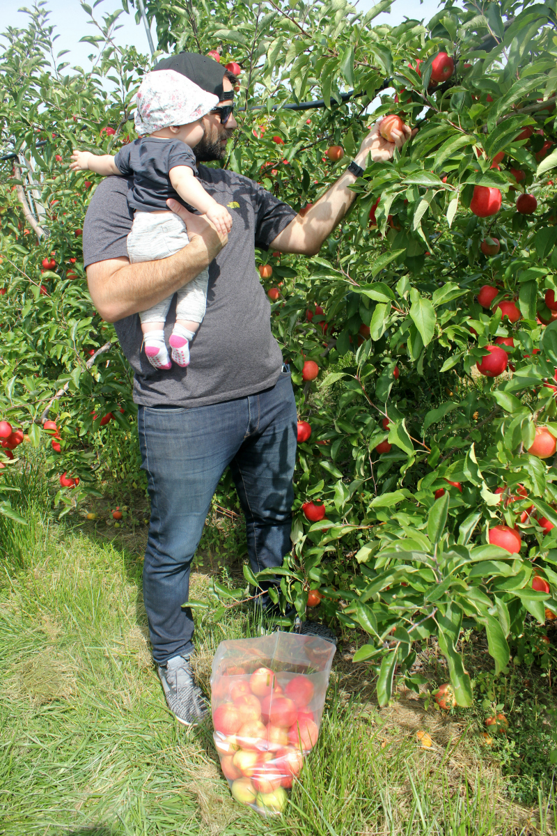 Fun Fall Family Activity - Apple Picking