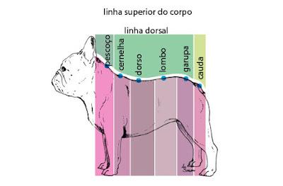 coluna do cão