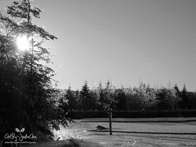 Newfoundland frozen landscape