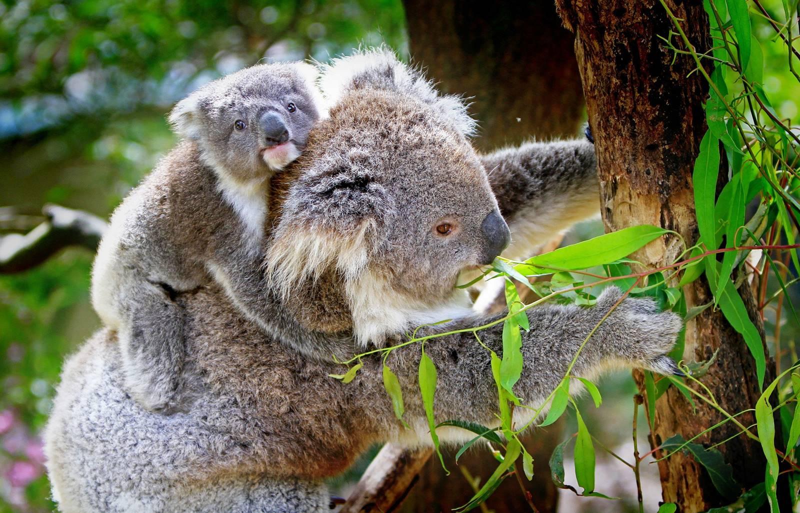 聖靈群島-漢密爾頓島-野生動物園-WILD LIFE-景點-推薦-交通-遊記-自由行-行程-住宿-旅遊-度假-一日遊-澳洲-Hamilton-Island-Whitsundays