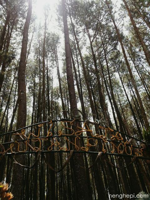 Nikmati Ketenangan di Hutan Pinus Imogiri, Jogja