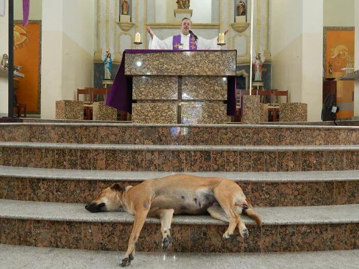 Compassionate Priest Invites Stray Dogs To His Service So They Can Find New Families