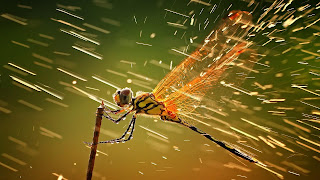 Dragon fly new amzing desktop background photos