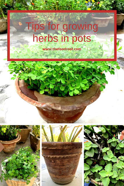 7 simple tips for growing herbs in pots