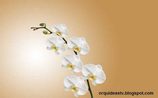 Dicas extras - Como cultivar orquídeas