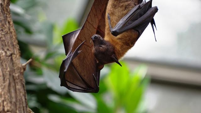 Un niño de EE.UU. muere de rabia por el mordisco de un murciélago