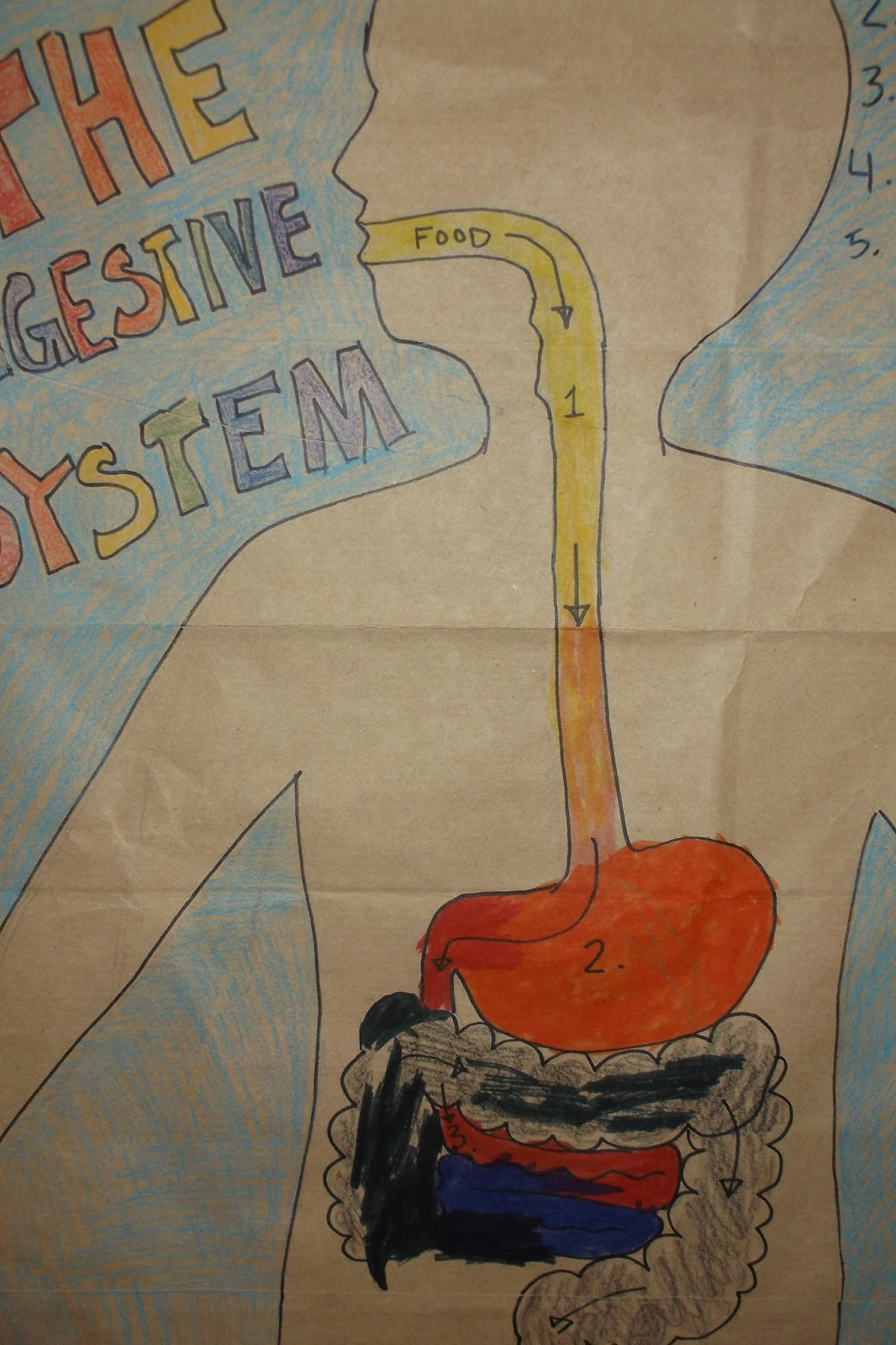 Lighthouse Family Schoolin The Digestive System Part Two
