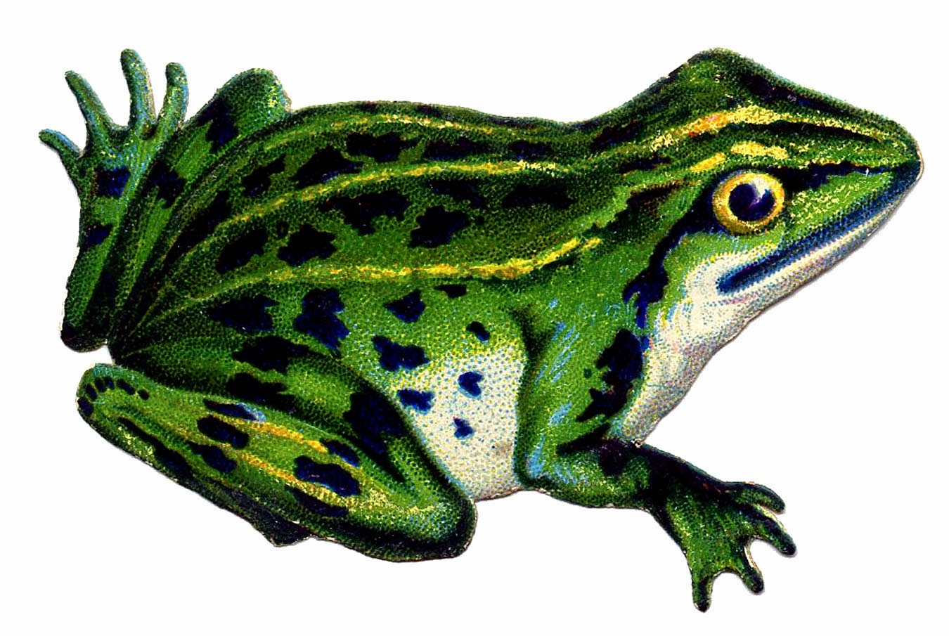 Strangers Amp Pilgrims On Earth Frog And Toad A Unit Study