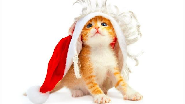 Gato  grande de papá Noel