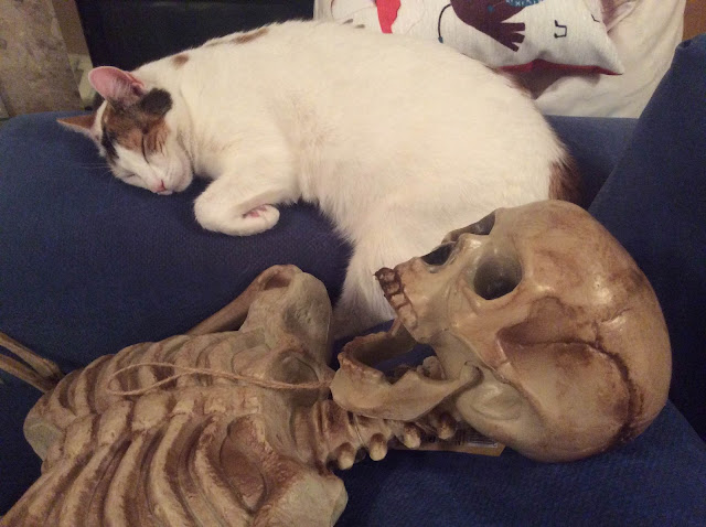 Cat lying with skeleton