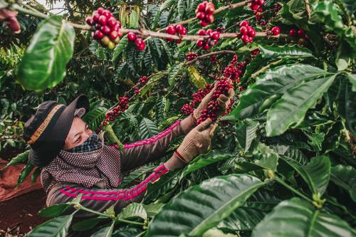 Nuti đầu tư vào nông trường cà phê Phước An