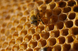 Honey has long been used as medicine by African traditional healers.
