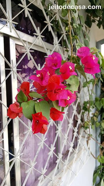 flores- e bracteas- tres-marias-bouganvilleas
