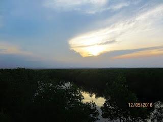 Wisata Favorit Hutan Mangrove Kota Langsa