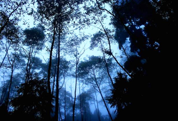 Mystic forest in Lepchajagat
