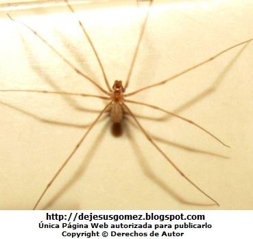 Araña con las patas extendidas. Foto de araña tomada por Jesus Gómez