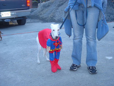 12 Creative and Unusual Dog Costumes (12) 2