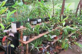 atau yang sekarang ini dikenal dengan TOGA ialah berbagai macam jenis tumbuhan obat yang sen Jenis Tanaman obat keluarga dan manfaatnya