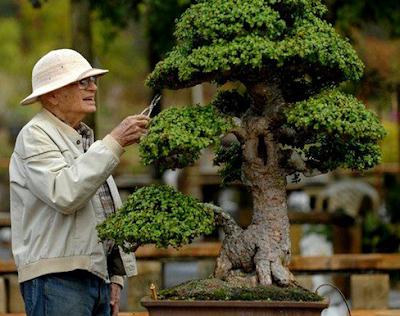 Bonsai Tanaman Hias yang Disukai Bapak-Bapak