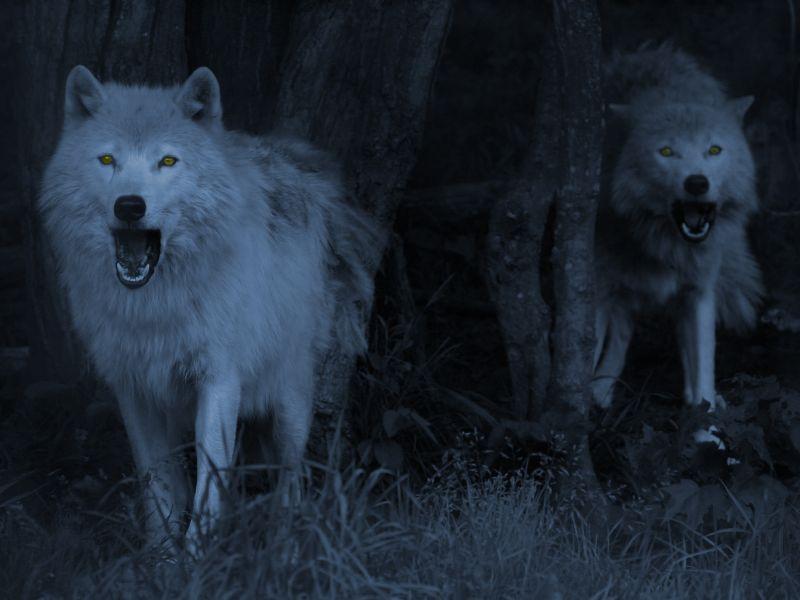 Nocturnal Memories: El lobo blanco. Saga Nocturna ...