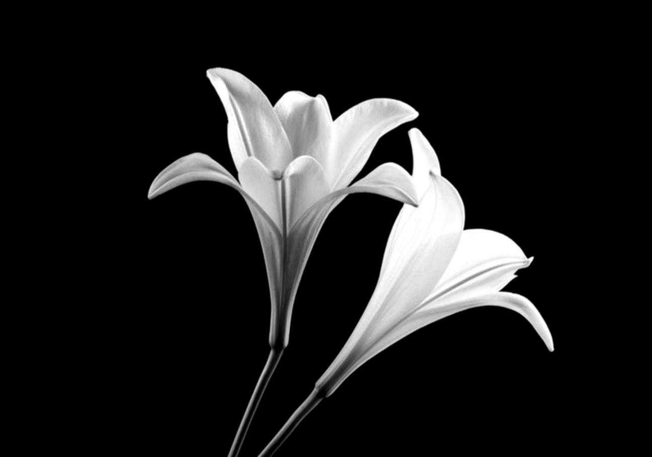 Flowers flowers beautiful scenary nice minimalist black white
