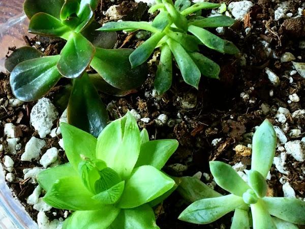 How to Create an Indoor Succulent Garden