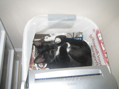 black cat curled up in a waste basked