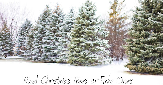 Real Christmas Trees or Fake Ones: Which is More Eco-Friendly?