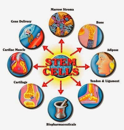 THE Small chart of Stem cell Diffentiation!