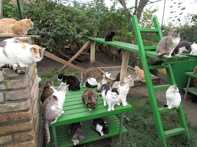 cat shelter felix serbia