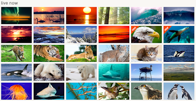 Bring the world to your students by engaging them with LIVE animal webcams from all over the world. Great examples of how to use this free website and app in any elementary classroom. Help students see the world outside of their classroom!