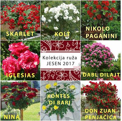Ruze  Stablasice, Banja Luka, Trebinje, Mostar, Sarajevo, Brcko, Ugljevik, Tuzla, Prijedor, Zenica